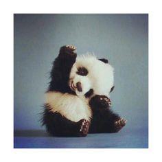 Hello, cuteness!