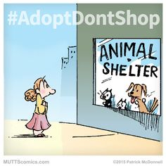 No such things as responsible breeders when there is no shortage of dogs in rescues. Never shop - ADOPT!!!
