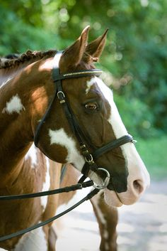 Image result for one eyed pinto horse