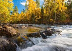 A peek at fall along the Swan River Nature Trail near Bigfork, MT.