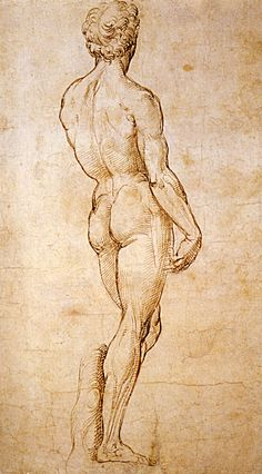 1508 Raphaël A Back View Of Michelangelo S David Pen And Brown Ink 39 9 Cm Londres British Museum Human Figure Drawing, Life Drawing, Drawing Sketches, Painting & Drawing, Art Drawings, Figure Drawings, Michelangelo, British Museum, Renaissance Kunst