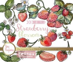 Strawberry Blossom clip art images watercolor hand painted PNG transparent background for blog cards invitations