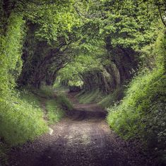 The road to bree : fairytaleasfuck beautiful world, beautiful places, beaut Beautiful World, Beautiful Places, Tree Tunnel, All Nature, English Countryside, Abandoned Places, Abandoned Castles, Abandoned Mansions, Belle Photo