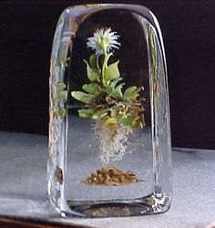 "Paul Stankard - ""Leafy Roots over Cinnamon Men Botanical"" Found on RubyLane.com"
