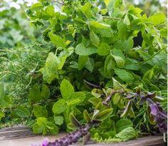 Ogród ziołowy na wiele lat - Mieszanka ziół