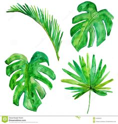 palm tree watercolor paintings - Google Search                              …