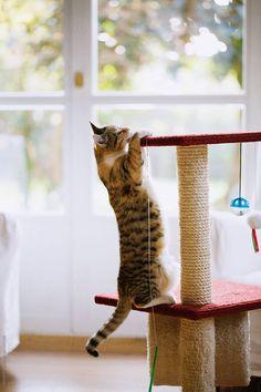 Like A Cat, Cats, Fun, Gatos, Cat, Kitty, Kitty Cats, Hilarious