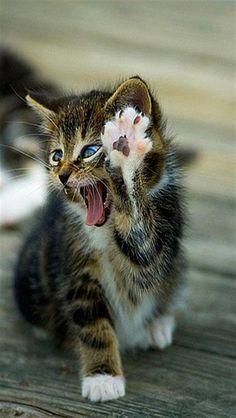 wallpaper iphone cats
