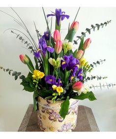 Iris, Beautiful Flowers, Plants, Plant, Bearded Iris, Planets, Irises