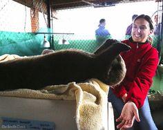 Sea otter Rialto has a biiig stretch - September 21, 2016