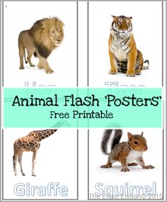 Free Animal Flash Posters can be used as large flash cards. I used them with my 1 year old. We put them in sheet protectors and placed ip them in a binder. Enjoy they are free