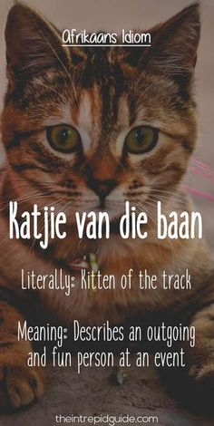Afrikaans is one one of the easiest languages to learn and make you laugh. Translating Afrikaans to English, these Afrikaans idioms will make you giggle. Afrikaans Language, Afrikaanse Quotes, Career Quotes, Success Quotes, Teachers Aide, Some Quotes, Wisdom Quotes, Quotes Quotes, Dream Quotes