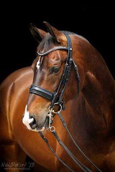 Horse by Nikki de Kerf