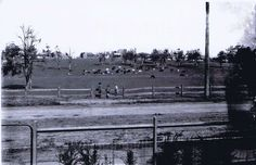 """Dairy Farm, Concord, 1923 """"Photo taken from 41 Correys Avenue. To the left of the photograph the road leads to Majors Bay Road and to the right of the photograph it leads to Concord Road. Five Dock, The Old Days, Historical Pictures, Sydney Australia, Back In The Day, Watercolor Paintings, Past, Dairy, Old Things"""