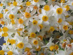Blumenstrauß im Foyer vom Hotel,   berauschender Duft eine Woche lang
