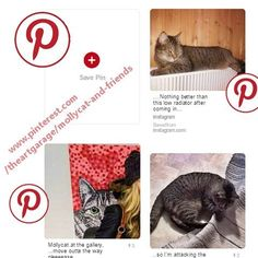 For any pinners out there, follow Mollycat on #pinterest, address on photo. #cats #instacat #catsagram #happy #kitty #猫 #katzen #instacat #petcat #mollycat #mollycatfinland #katter #instacool #instafollow #instalike #pets #kitty #whiskers #coolcat #cute #kittens #catstuff #instacats #catoftheday #catsofig #catsofinstagram #instalikes #cat #catseyes #meow #catlover