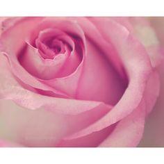 Rose Photography, Pink Rose Photography, Rose Print, Shabby Chic Art, Pink Rose ARt, Rose Petals, Flower Still Life, Pink Flower Art