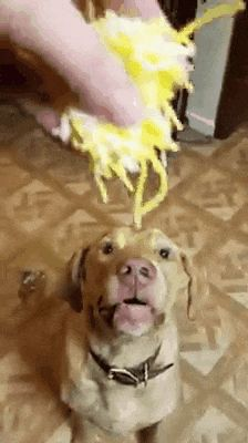 Did that dog get every single piece of cheese without it falling onto the ground? What? That's dog has skills