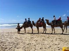 Camel Rides, Lighthouse Beach - Port Macquarie - Suitable for kids of all ages Stuff To Do, Things To Do, Port Macquarie, Lighthouse, Camel, Safari, Travel Destinations, Places To Go, Universe