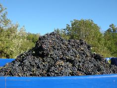 a special Mountain ;-)  #Piedmont #wine