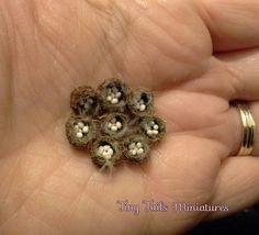 Miniature Bluetit Nests