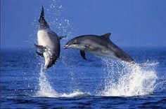 Great photo of dolphin jumping