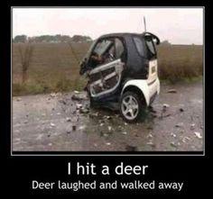 Funny car crash - I hit a deer - http://jokideo.com/funny-car-crash-hit-deer/