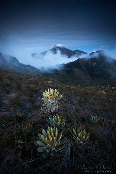 Volcan de Tolima #colombia