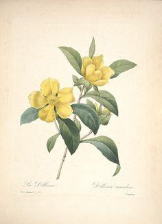 https://flic.kr/p/cXNPCo | n101_w1150 | Choix des plus belles fleurs :. Paris :Ernest Panckoucke,[1833?].. biodiversitylibrary.org/page/12695502