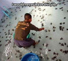 I want that job.... Ok I so thought those were spiders for a minute, and was like why the crap would you want that job! Lol>> I thought they were spiders!