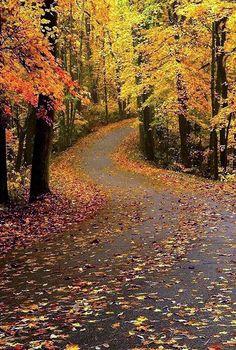 Rainy autumn road (Clifty Hills State Park, Indiana) by Bernie Kasper