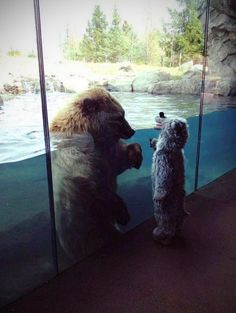 Bear meets kid in bear costume…