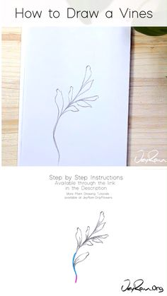 Learn how to draw vines with this simple step by step tutorial made for beginners. These pencil sketches are perfect for your bullet journals and sketchbooks, join me on this artistic journey by follo Vine Drawing, Flower Art Drawing, Flower Drawing Tutorials, Leaf Drawing, Floral Drawing, Plant Drawing, Art Tutorials, Flower Drawings, Plant Sketches