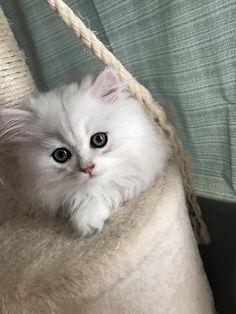 Wish Granted, Adoption, Animales, Cat Breeds, Foster Care Adoption