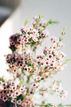 lil lovelies