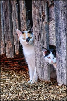 Barn Cats see more at http://blog.blackboxs.ru/category/funny-cats/
