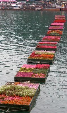 PAM - drijvende tuin in bloei