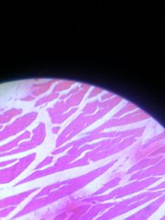 Microscophic Blood