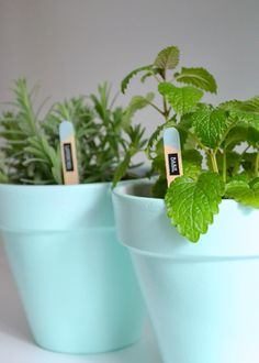 Cute potted plants & easy diy plant labels by @uglyducklingdiy #Brother #LabelIt