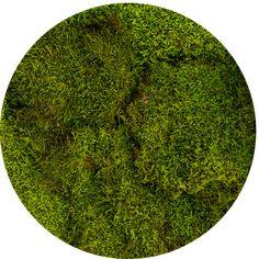 """Résultat de recherche d'images pour """"moss"""""""