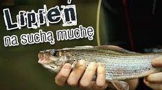 Wędkarstwo muchowe - lipień na suchą muchę #wędkarstwo #przynęty #poradnik #filmywędkarskie #flyfishing https://www.youtube.com/user/CoronaFishing/videos