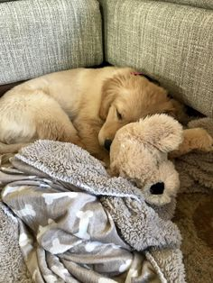 The puppy I am watching sleeps with a stuffed version of herself and I cant handle the cuteness. Cute Baby Dogs, Cute Dogs And Puppies, Baby Puppies, I Love Dogs, Pet Dogs, Dog Cat, Doggies, Cute Little Animals, Cute Funny Animals