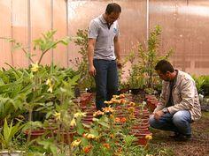 Pesquisadores de Araras criaram novo tipo de adubo com grama cortada (Foto: Reginaldo dos Santos/EPTV)