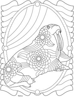 Dover Sample   Coloring Page walrus