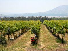 Великолепные пейзажи виноградников мира фото дня