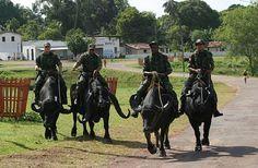 Ilha de Marajó - Pará - Pesquisa Google