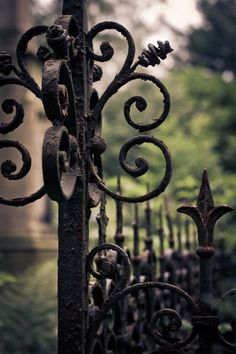 Had a wrought iron fence and gate in my yard/garden in Portland . Old Gates, Gothic Garden, Wrought Iron Fences, Black Garden, Iron Art, Garden Gates, Garden Doors, Dream Garden, Porches