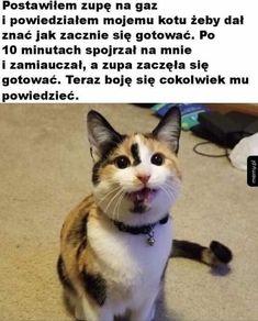 Cats, Fun, Animals, Gatos, Animales, Animaux, Animal, Cat, Animais