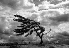 La ráfaga de viento, de Ariel Bustillo León 1º ESO C  https://ieslagranjabiblioteca.blogspot.com.es/2017/11/microrrelatos-ganadores-primer-ciclo-eso.html