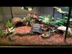 My Ball Python Enclosure